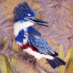 alice-frenz-belted-kingfisher-detail